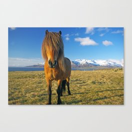 Whats up? :) Canvas Print