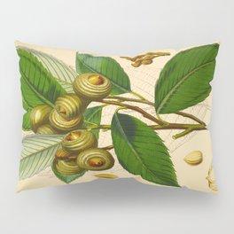 Vintage Scientific Illustration Himalayan Tree Nuts Scientific Illustration Pillow Sham