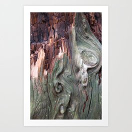 Organic Structure - Japan Patterns - Wood Colors - Old Tree in a Forest   Art Print