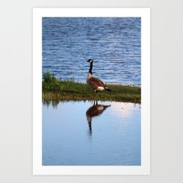 Goose Reflection Art Print