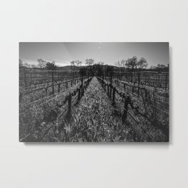 Napa Vines Metal Print