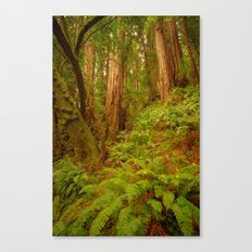 Redwoods Regional II Canvas Print
