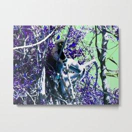 Sifaka in Purple Metal Print