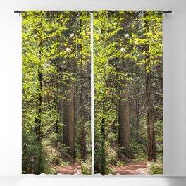 Forest Trail - Yosemite's Wawona Loop Trail Blackout Curtain