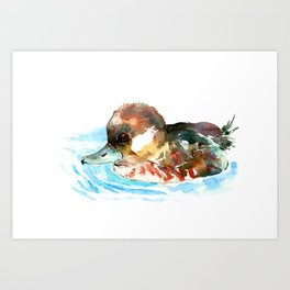 Duck, Bufflehead Duck baby Wild Duck Art Print
