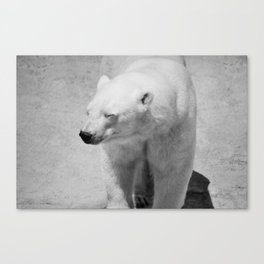 Polar Bear Photography | Canada | Black and white | Mammal | Nature | Wildlife Canvas Print