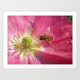 flower fly macro VII Art Print