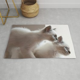 Portrait of two white long hair birman cats with blue eyes. Rug