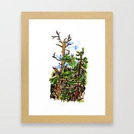 The Scraggley Pine Framed Art Print