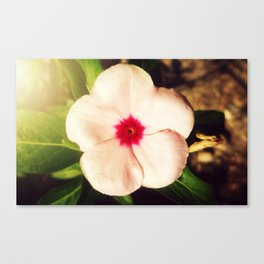 A Small Pink Creature I Canvas Print