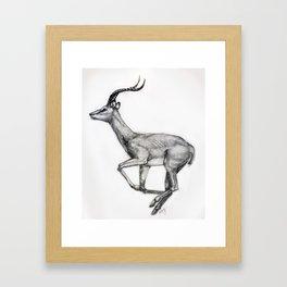 Antilope Framed Art Print