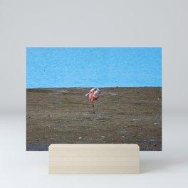 A Single Spoonbill Mini Art Print