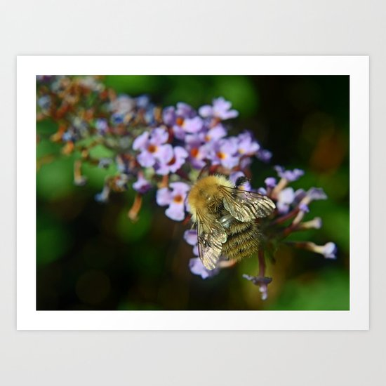 Fluffy Bumble Art Print