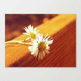 Abandoned flowers Canvas Print