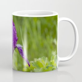 Spring iris Moraea sisyrinchium on green background Coffee Mug