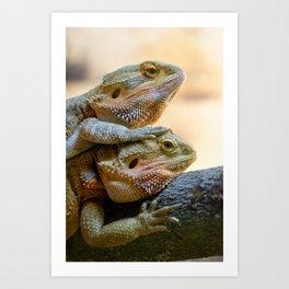 Couple of bearded dragons Art Print