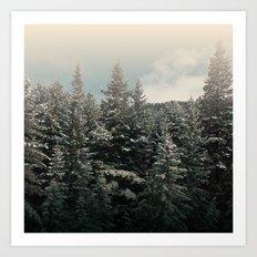 pine tree tops Art Print