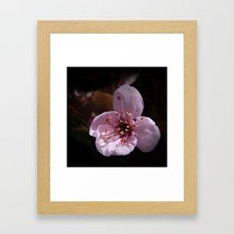 japanese cherrytree-blossom on black -1- Framed Art Print