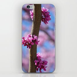 Spring Blossoms iPhone Skin