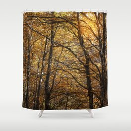 Forest in Autumn time Shower Curtain