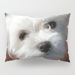 Cute Maltese asking for a treat Pillow Sham