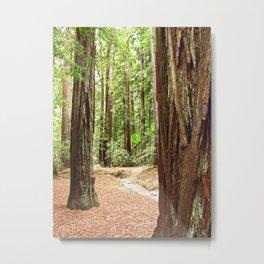 Armstrong Woods 3385 Metal Print