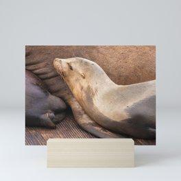 Sleeping Sea Lion Mini Art Print