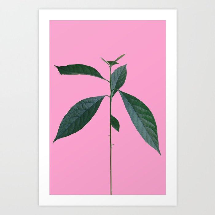"""Schnubsi"" The Avocado Plant Art Print"