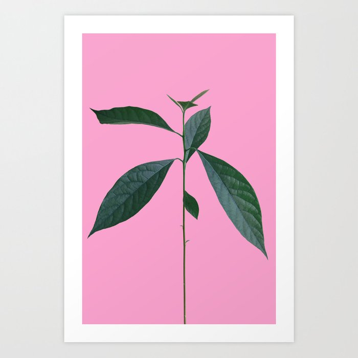 """Schnubsi"" The Avocado Plant Art Print"