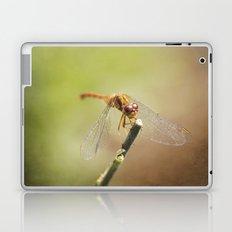 Maroon & Gold Laptop & iPad Skin