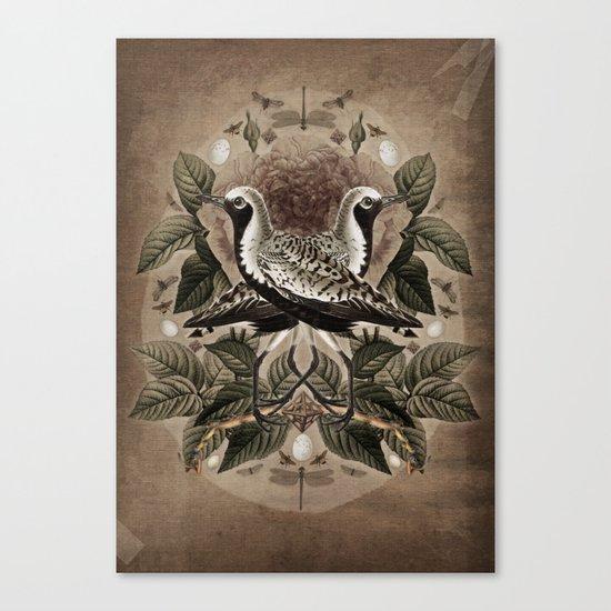 Pluvialis squatarola Canvas Print