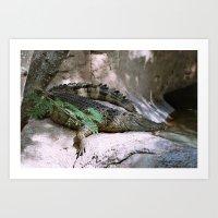 crocodile Art Prints featuring crocodile by lennyfdzz