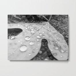 The Rain Drops that Stopped. Metal Print