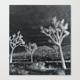 Joshua Tree InfraRed by CREYES Canvas Print