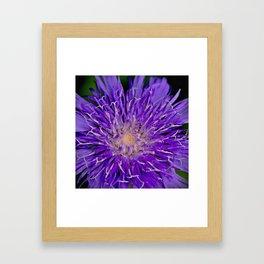 Knapweed Wildflower Framed Art Print