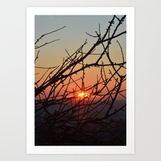 Branches in sunset Art Print