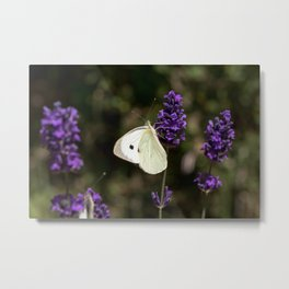 Relaxing butterfly on lavender Metal Print