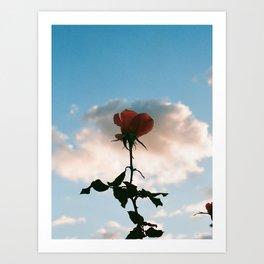 Rose in the clouds Art Print