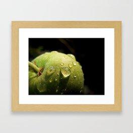 Morning Apple Dew Framed Art Print