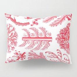 Ernst Haeckel Florideae Red Algae Pillow Sham