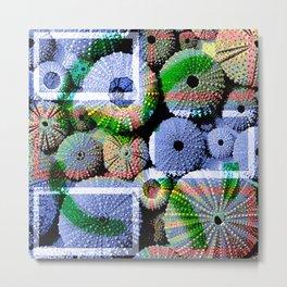 Urchins Metal Print