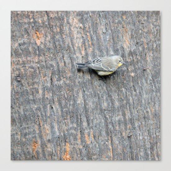 TEXTURES -- Warbler on Palm Bark Canvas Print
