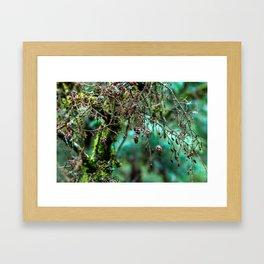 Little Pinecones Framed Art Print