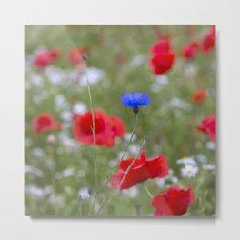 Spring Meadow Poppy Flowers full Bloom Metal Print