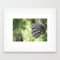 rileigh smirl Framed Art Prints featuring Pinecone by Rileigh Smirl