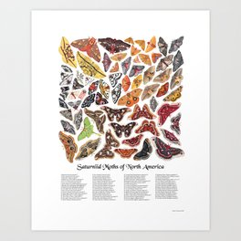 Saturniid Moths of North America Art Print