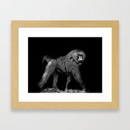Baboon as sculpture Framed Art Print