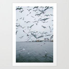 A flock of seagulls; Winter choas  Art Print