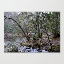 By the Creekside Canvas Print