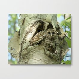 Barred owl baby camouflage Metal Print